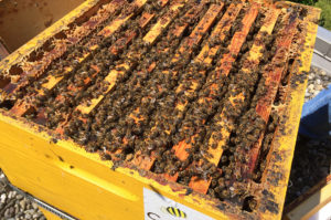Antilope De Bie bijenkast